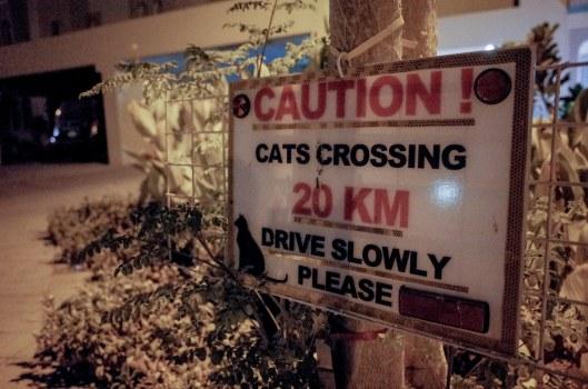 Awas Kucing